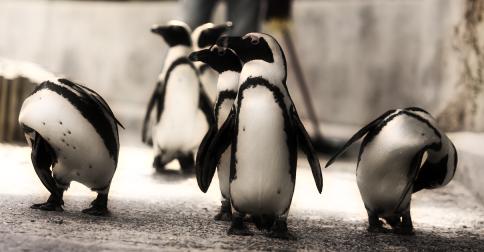 Nome:      penguins.png Visitas:     699 Tamanho:  246,0 KB