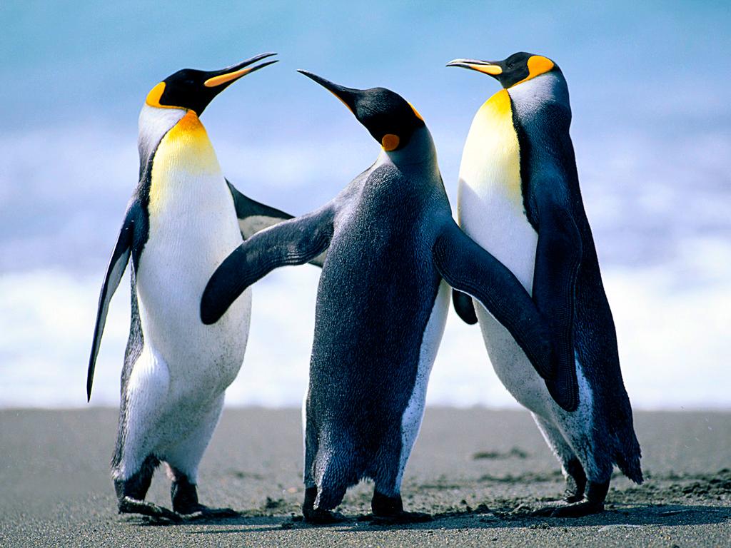 Clique na imagem para uma versão maior  Nome:         Penguins.jpg Visualizações:19 Tamanho: 759,6 KB ID:      60704